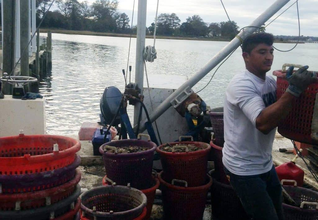 Picture of Oyster Farmer 'Fishing Ford's Wicked Oysters'